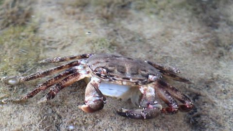 Sea life. A dead crab and eat his shrimp Live Action