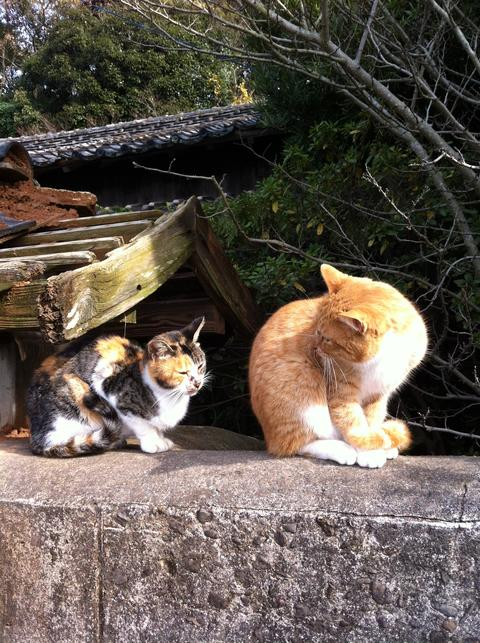 Old japanese house and cats Photo
