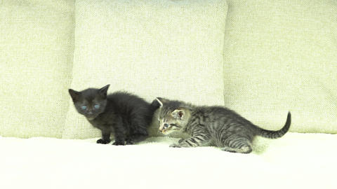Kittens Live Action