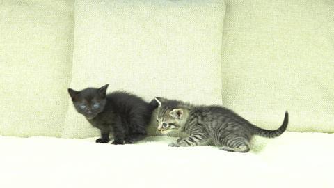 Kittens Footage