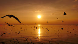 Seagulls Flying Above Sea At Sunset Footage