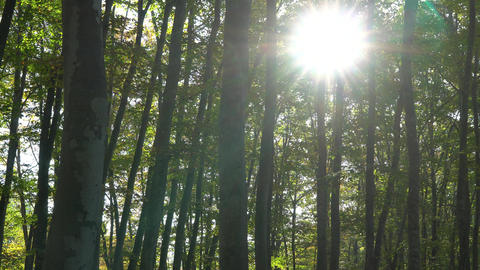 新緑のブナ林 ライブ動画