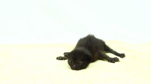 Newborn kitten Footage