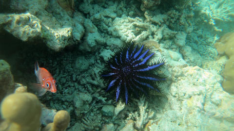 Starfish Feeding On Reef Coral In Tropical Sea Live Action