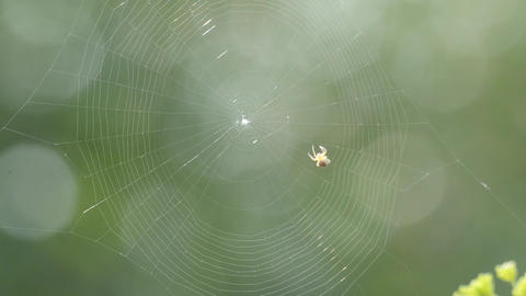 Small spider waving a net very fast Footage