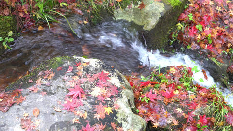 Autumn leaves and river Footage