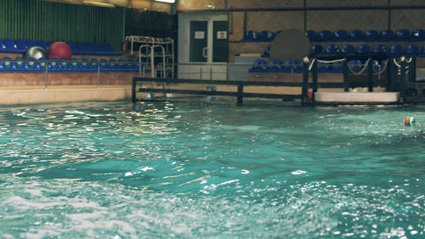 Dolphin jumping with ball during training in swimming pool in dolphinarium Footage