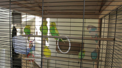 The Green Parrots Cage Live Action