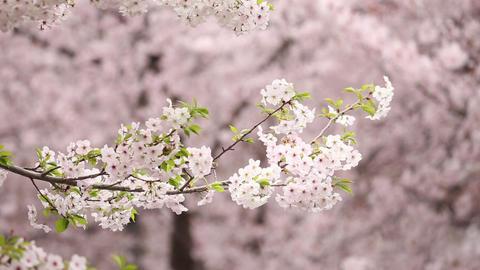 Korea Spring 1