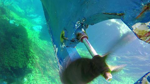 boat trip, reeds, bizarre underwater of azmak river, turkey Footage