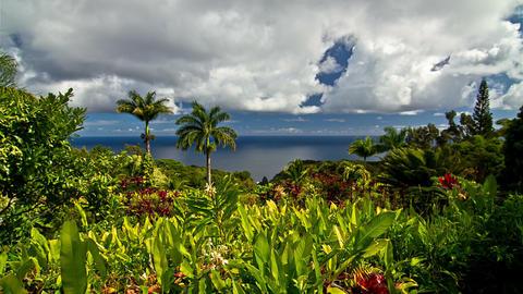 4K Timelapse, Garden Of Eden, Maui, Hawaii, USA Footage