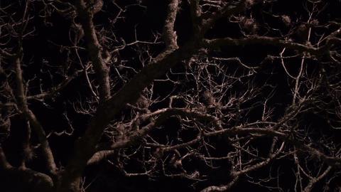 Dead Tree on a Spooky Night Dolly Footage