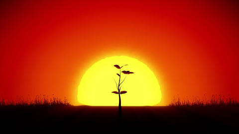 Beautiful Sunrise and Growing Tree. Achievement and Progress Concept 3d animatio Animation