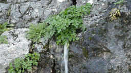 Natural water flowing from the mountain Footage