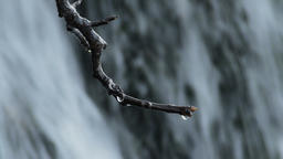 Drops of water sliding and falling in a dry branch of a tree in a waterfall Footage