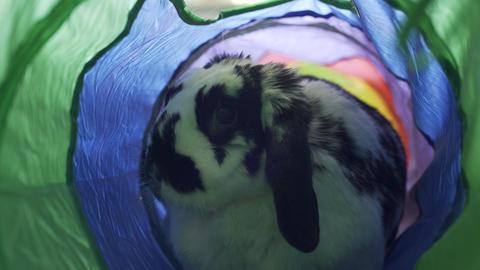 Adorable Bunny Hopping Through A Tube Live Action