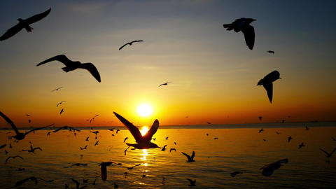 Seagulls are flying and the sunset in the sea Footage