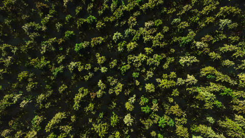 Colorful aerial view camera moves from green forest of dense mixed tree tops ビデオ