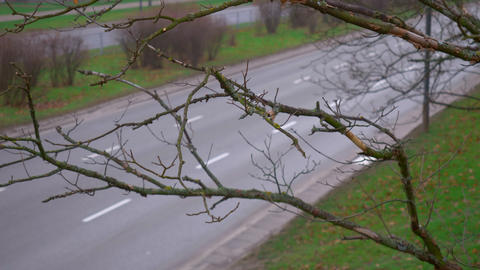 Dry branch on the background of the road on which cars are going. Snowing Footage
