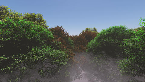 foggy forest reveals blue sky Footage