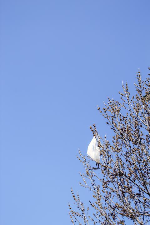 Trash bag on a tree フォト