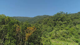 View of mountain landscape with rainforest Footage