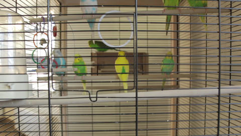 The Parrots Bird Cage Live Action
