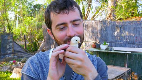 Caucasian Man Hold Baby Chick, Kissing Holding Chicken stock footage