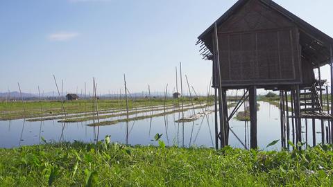 Floating gardens on Inle Lake, Myanmar (Burma) Footage