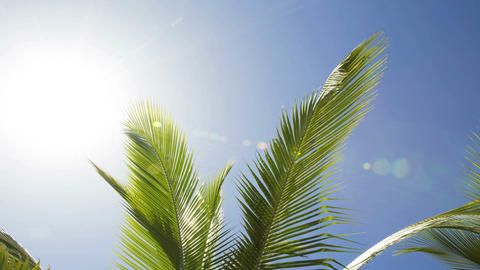 Time lapse of beautiful palm trees Footage