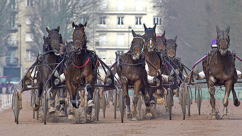 Horse racing, French Trotter, harness racing at racecourse, Caen, Normandy, France Footage