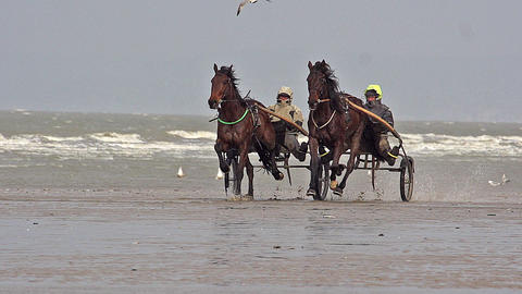 Horse racing, French Trotter, harness racing during Training on the Beach, Cabourg in Normandy, Live Action