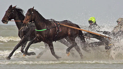 Horse racing, French Trotter, harness racing during Training on the Beach, Cabourg in Normandy, Footage