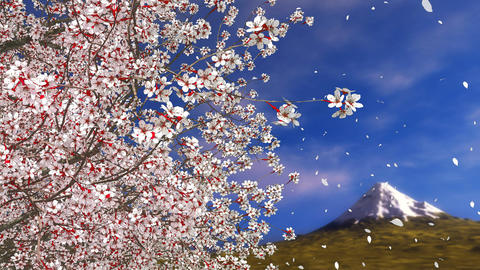 Sakura cherry blossom falling petals and Mt Fuji Animation
