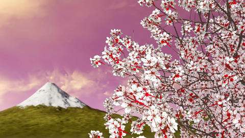 Mt Fuji and blooming sakura cherry tree at dawn Animation