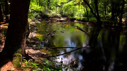 Landscape with forest and a river in front. River in the forest Footage