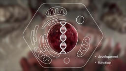 human cell biology Footage