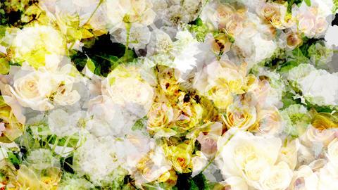 Flower_BG CG動画