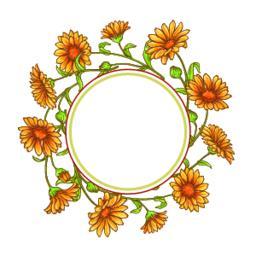 calendula flower vector frame Vector
