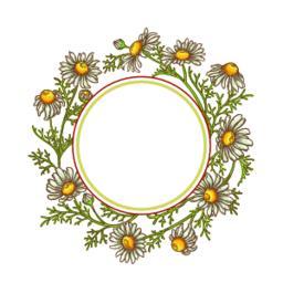 chamomile flower vector frame Vector