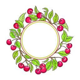 cherry branch vector frame Vector