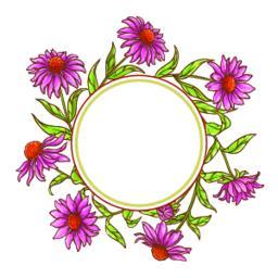 echinace purpurea vector frame Vector