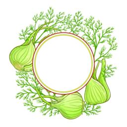 fennel vector frame ベクター