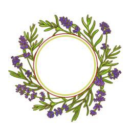 lavender plant vector frame Vector