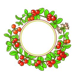 cranberry branch vector frame ベクター