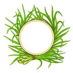 lemongrass plant vector frame Vector