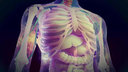 medical animation - spinal cord Footage
