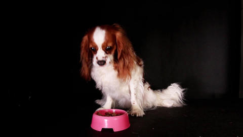 Hungry dog eating pet food Footage