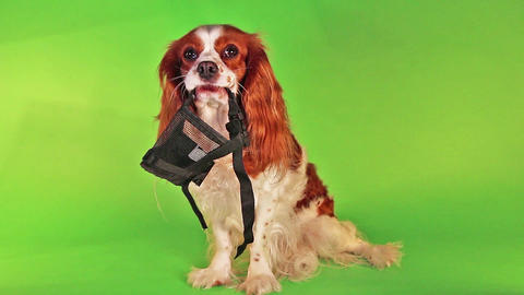 Dog with soft muzzle Live Action