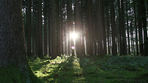 Sunset In The Forest, Part1 stock footage